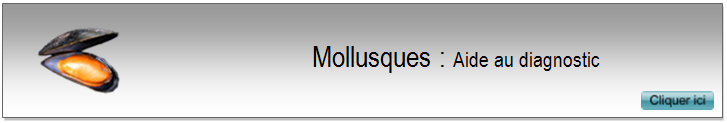 2 Mollusques