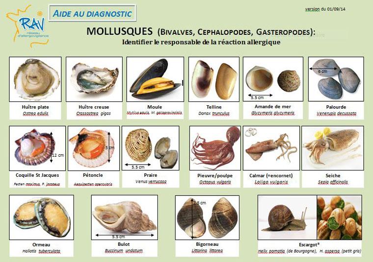 2014 09 fiche aide au diagnostique mollusques 1