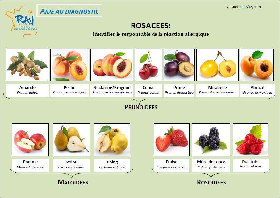 Aide au diagnostic - Rosaceae