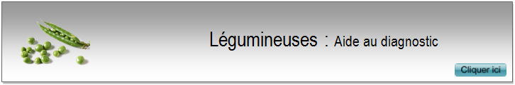 2 legumineuses